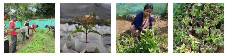WADO WeForest NGO Collaboration Ecological Restoration sustainability fashion sneakers brand